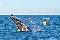 Whale Watching Tour in Mazatlan