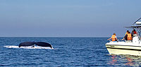 Private Whale Watching Mazatlan Tours