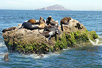 Sea Lion Rock - Mazatlan, Mexico