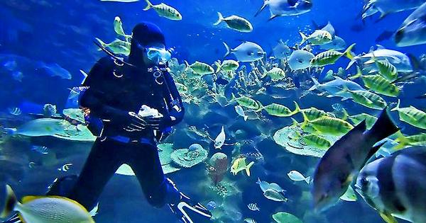 Mazatlan Scuba Diving - Book Here and Save!
