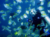Mazatlan Scuba Diving